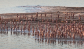Naked in the Dead Sea for Spencer Tunick